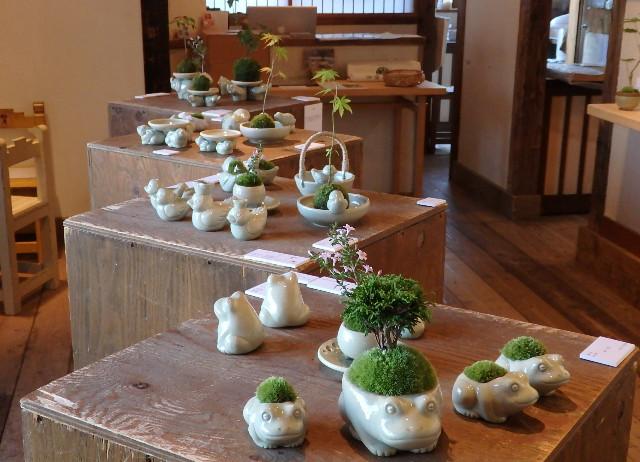 池田早季恵 陶と苔
