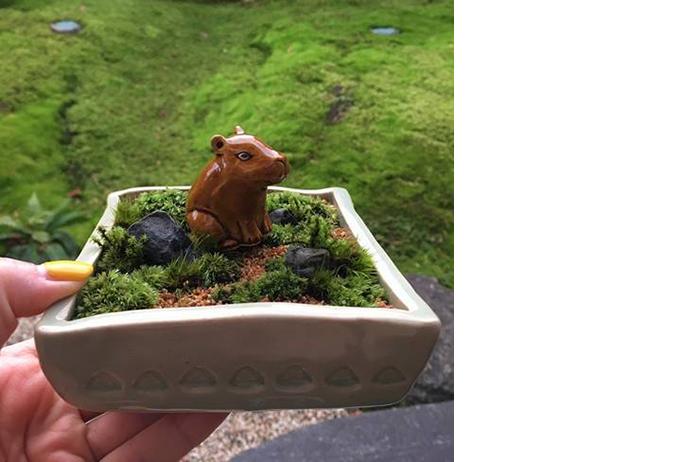 コケ庭 ~陶器と苔で作る小さな庭~